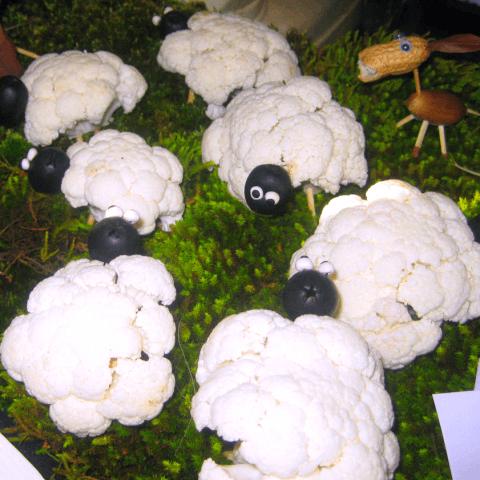 ovejas santo tomas