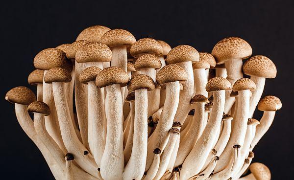 mushroom-389421_1920_opt