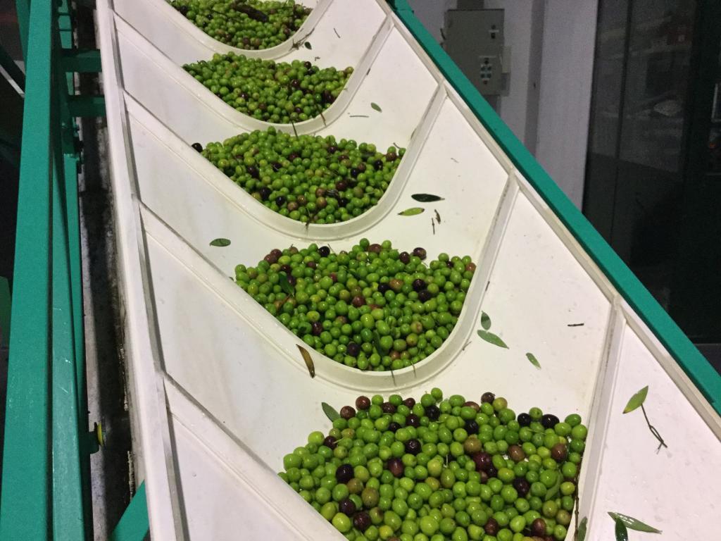 conoce el aceite de oliva la maja