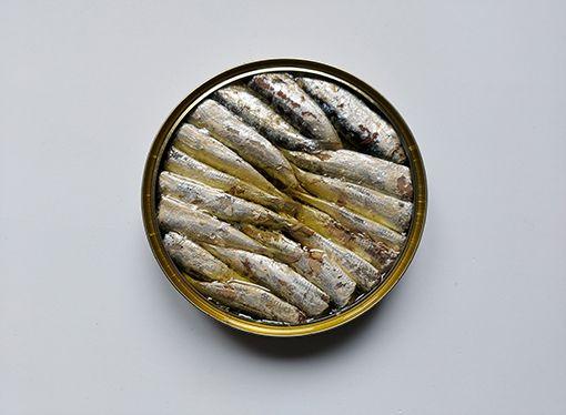 sardines new gallery